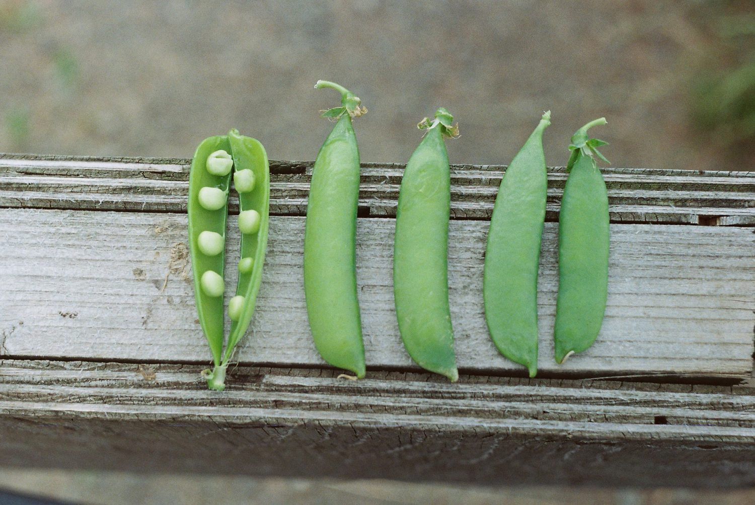 peas inside of green beans