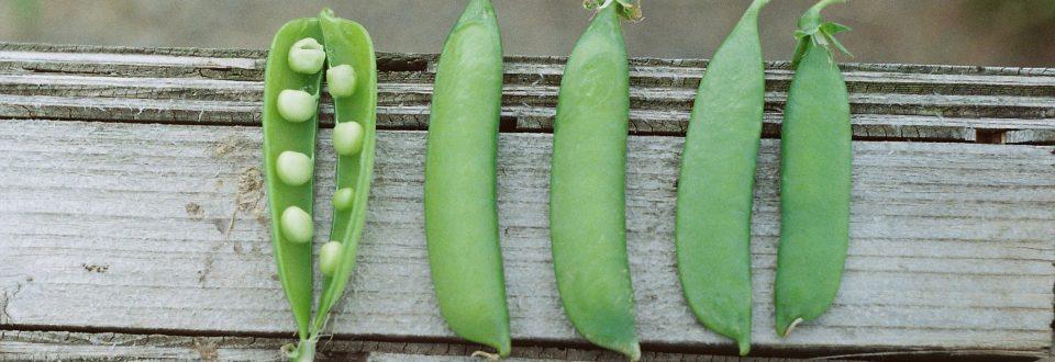 peas inside of green beans